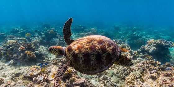 Check out Norman Reef, Great Barrier Reef on #StreetView