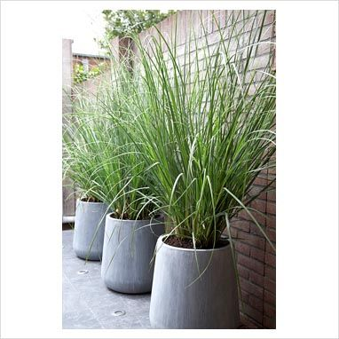 Pots U0026 Planters | Grasses In Grey Contemporary Pots