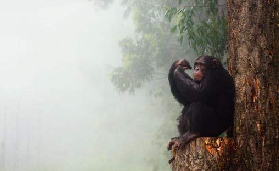 Chimp Eden, Umhloti lodge in Nelspruit!