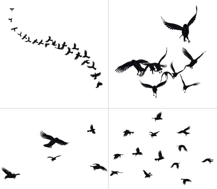 Crows In Flight PNG Stock by Roys-Art on DeviantArt