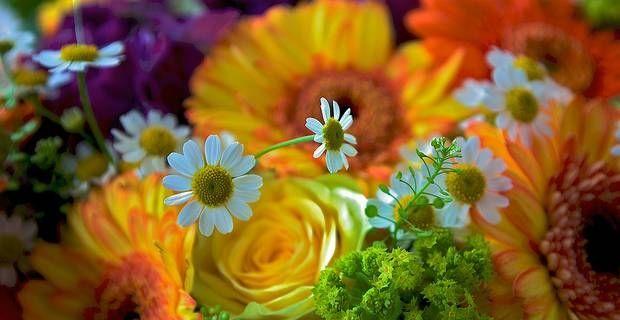 Deko-Accessoires selbst gemacht: Blumen trocknen