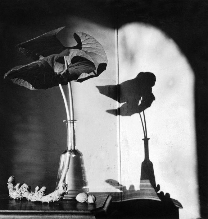 "Herbert List.   GERMANY. Hamburg. 1933. ""Flower and shadow"".   Magnum Photos -"