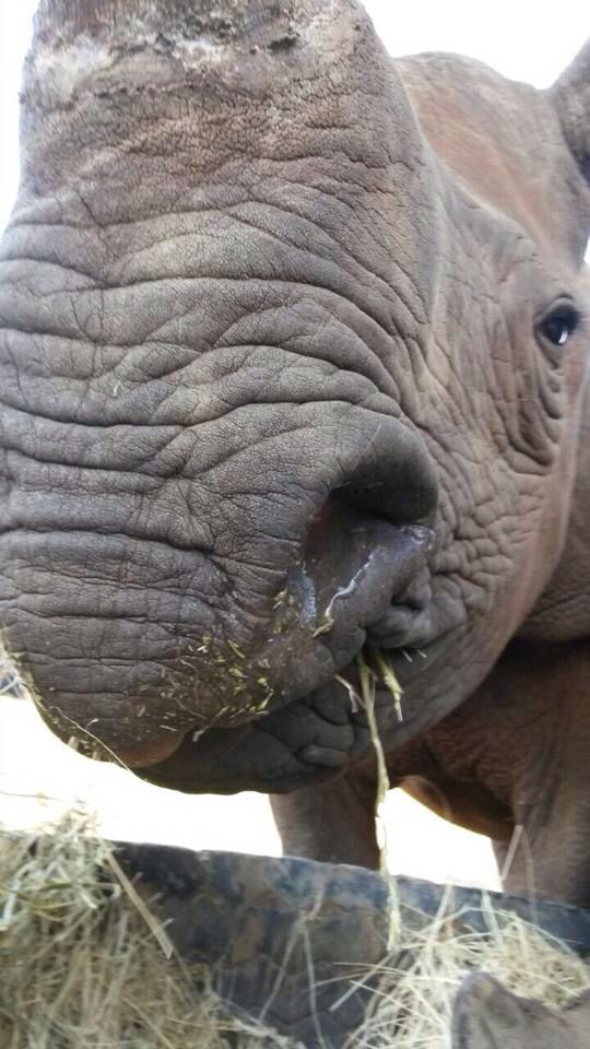Shaka at The Rhino Orphanage