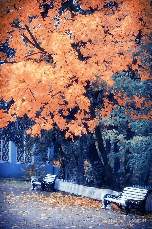 Autumn Park Photo Art Prints by cinema4design, Orange Leaves, Autumn Posters #autumnphotography #autumnposters