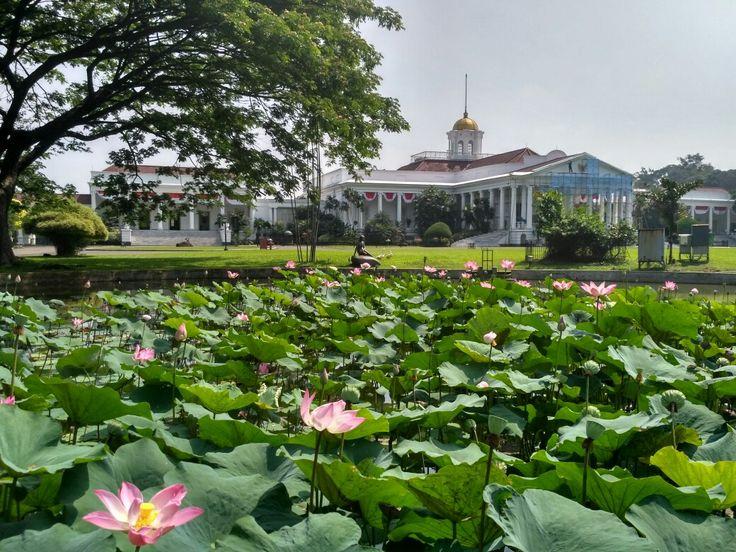Bogor Bogor, Botanical gardens, Garden