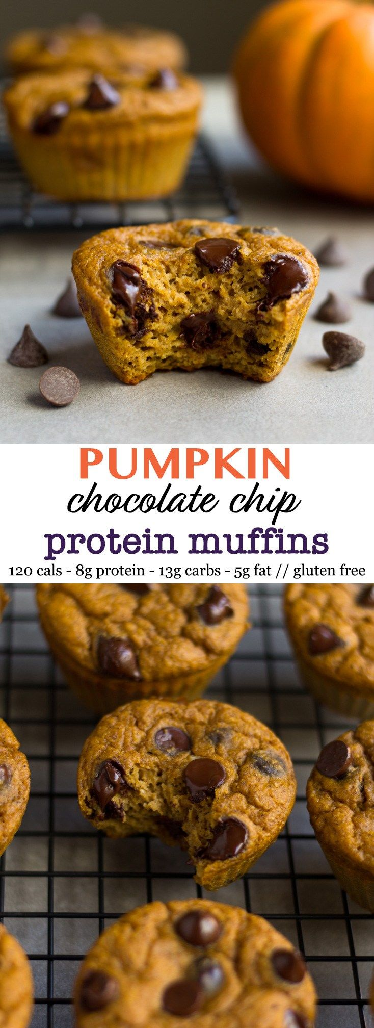 These Pumpkin Chocolate Chip Protein Muffins are made in a blender and are high protein & low carb, gluten free, and less than 120 calories - Eat the Gains