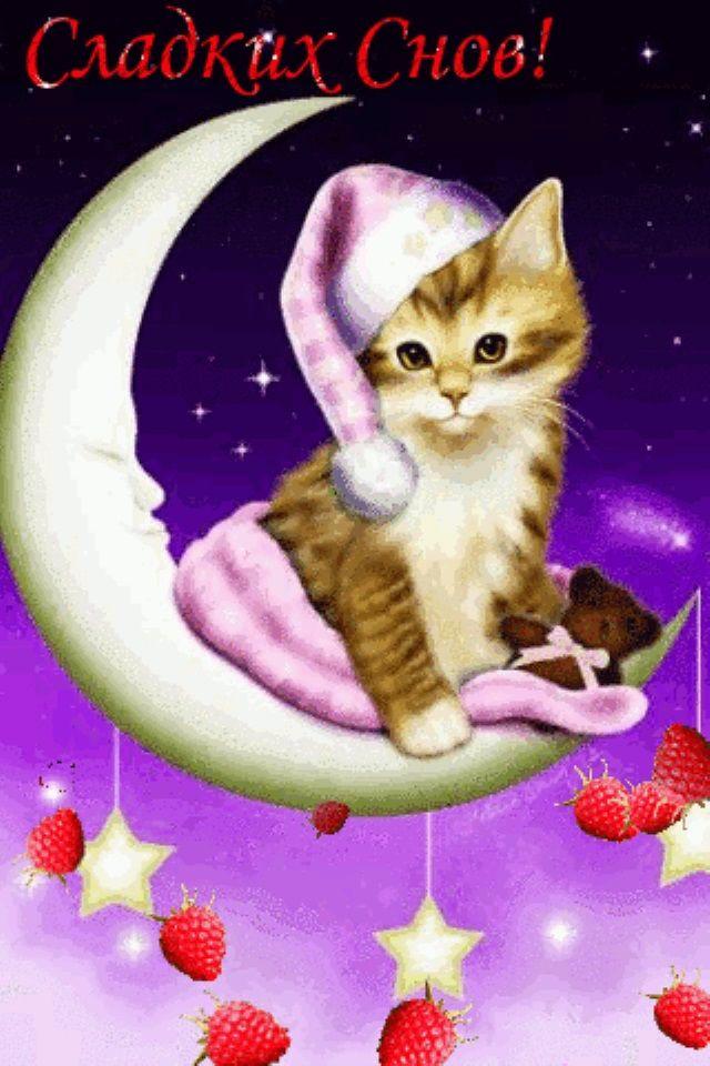 Спокойной ночи видео открытка с животными