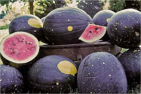 Moon and stars watermelon.