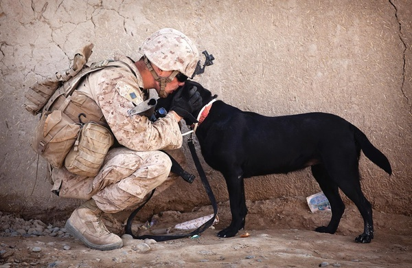 Dog And Soldier: Marine, Military Dogs, Soldiers, Best Friends, Pet, Veterans Day, Military Photo, Service Dogs, German Shepherd