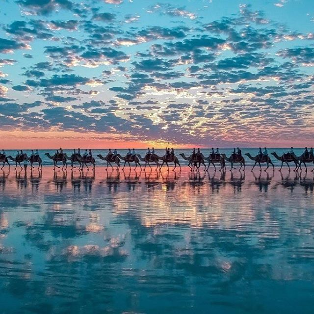 Верблюды на побережье Австралии. _ Camels on the coast of Australia. _ #trip #travel #wanderlust #passportready #travelblogger #amazing #city #worldcaptures #worldplaces #love #travelgram #instatravel #traveling #traveler #igtravel #travelphotography #tra