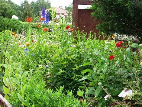 Tradycyjne wiejskie ogródki Ogrody pełne różnobarwnych kwiatów, zapachów, brzęczenia pszczół i śpiewu ptaków zawsze otaczały nasze wiejskie domy. Trad...