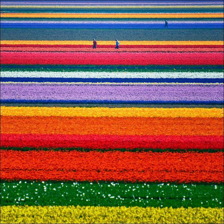 Netherlands in MayAlbum Covers, Fields Of Flower, Tulip Fields, Tulip Gardens, The Netherlands, Bored Pandas, Cities And Colours, Places, Flower Fields