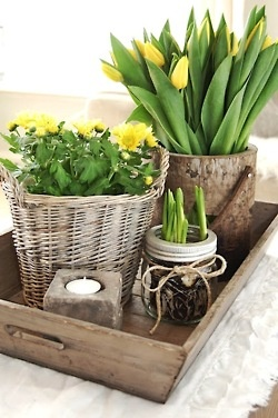 Display: Use new tray, concrete basket, clay pot with moss etc.  Buy flowers in pots from Home Depot or Lowes
