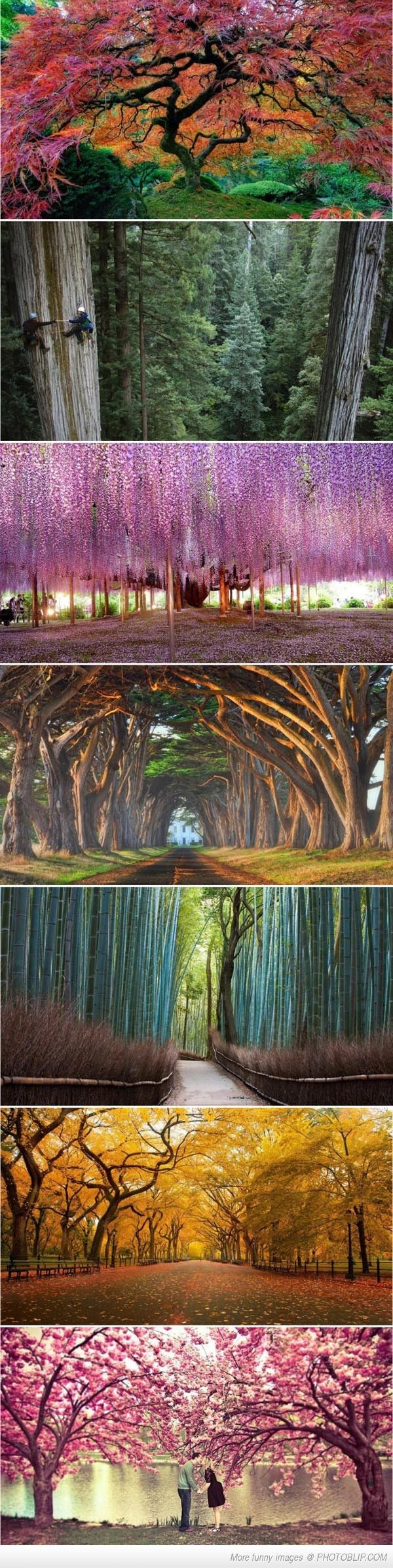 (for you, Wifey! some of the world's most beautiful trees!)