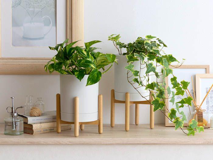 フラワーポット Rean レアン 1個単体販売 公式 北欧インテリア 家具の通販エア リゾーム フラワー ローテーブル ガラス インテリア 一人暮らし
