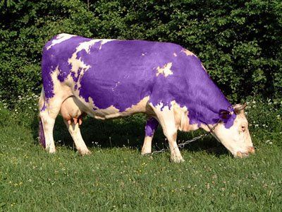 Have you read the book The Purple Cow, by Seth Godin? Excellent! One of my favorites... how can you make your business UNIQUE (a purple cow)?! Will have to save this photo and make a blog post! http://www.CreateACashFlowShow.com/