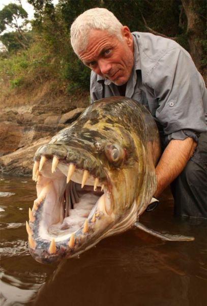 EXTREME fisherman!  He tells no tales...it's all real!: Great White Sharks, Hells No, Rivers Monsters, Jeremy Wade, Goliath Tigerfish, Lakes, Funny Stuff, Nopefish, Animal