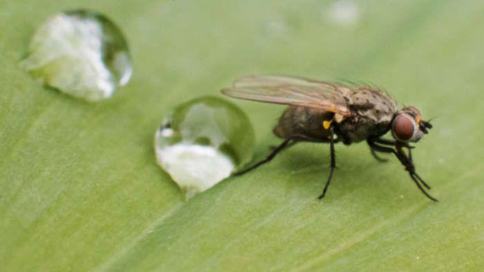 Mit Diesen Hausmitteln Vertreiben Sie Ruckzuck Die Fliegen Aus Ihrer Wohnung Hausmittel Gegen Fliegen Kleine Fliegen Hausmittel