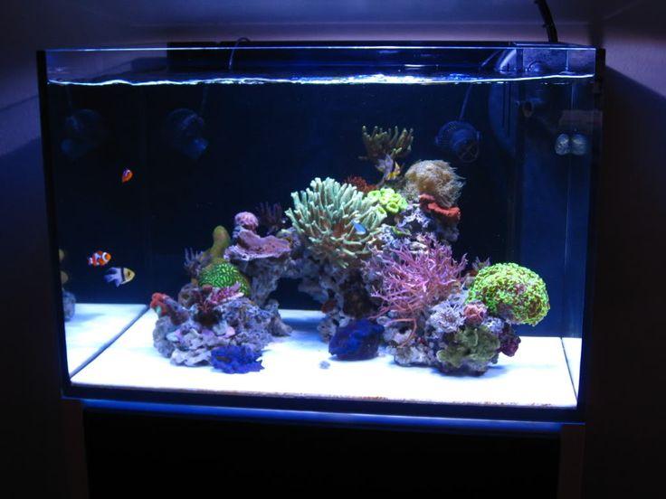 1000 images about aquariums on pinterest reef aquarium for Aquarium nano marin