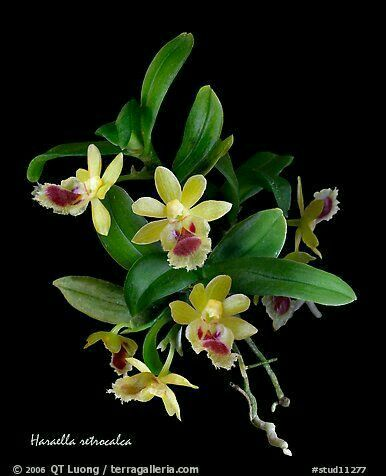 57 Best Mounted Orchids Images On Pinterest Plants