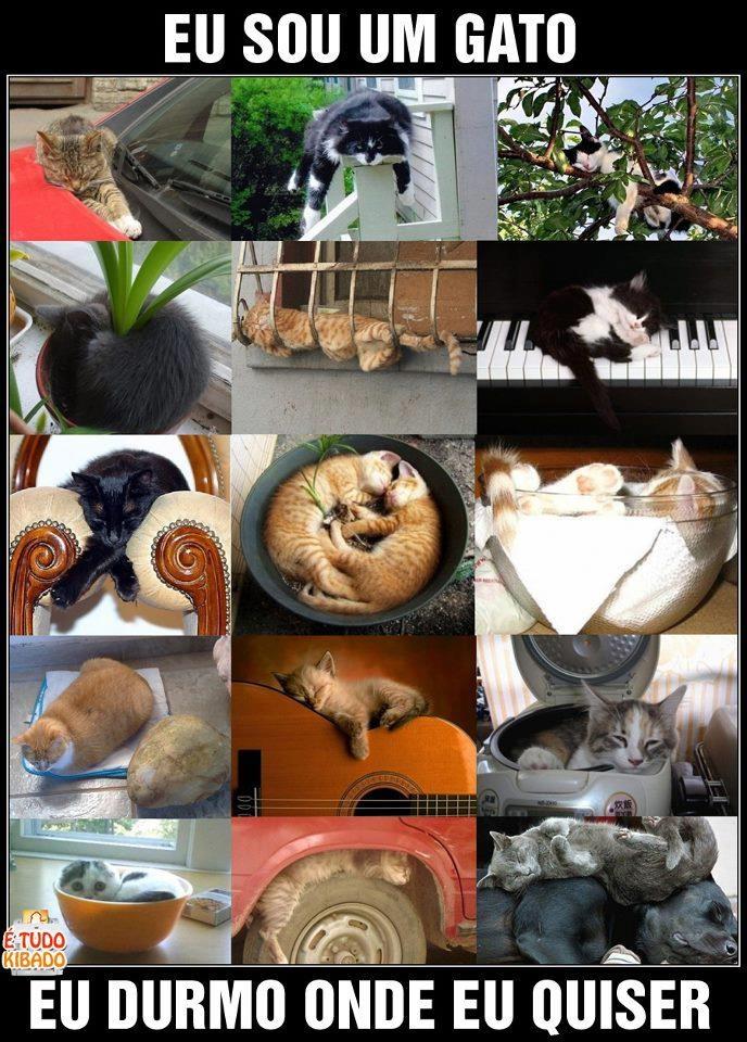 I'm a cat: Shared Photo, Cats 3, Por Gatos, Animal