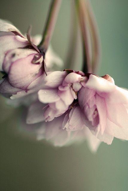 "Flowers "" ❤ """