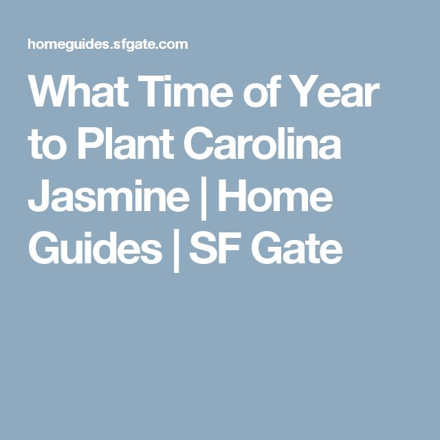 What Time of Year to Plant Carolina Jasmine | Home Guides | SF Gate