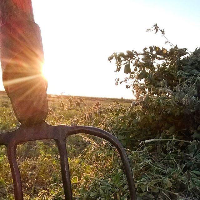 Dimineața, pe câmp 😊 Iubim satul românesc! #sezatoareaurbana #soare #romania