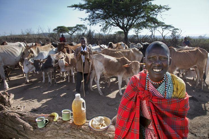 Что едят обычные люди вразных странах мира. Нулкисаруни Таракуай, третья из четырех жен одного из вождей народа масаи. Фотография сделана недалеко от деревни масаи рядом с городом Нарок, Кения. Ей 38 лет, рост 1,65, вес 47 кг. Все богатство масаи - рогатый скот, земля и куча детишек. Ее дневной рацион самый скудный - 800 ккал.      Источник: https://www.adme.ru/tvorchestvo-fotografy/chto-edyat-obychnye-lyudi-v-raznyh-stranah-mira-1023460/ © AdMe.ru