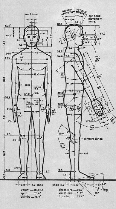 movement drawing human proportions