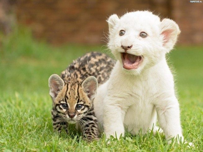 oooo .... which two słodziaki #sweet #cats #pets