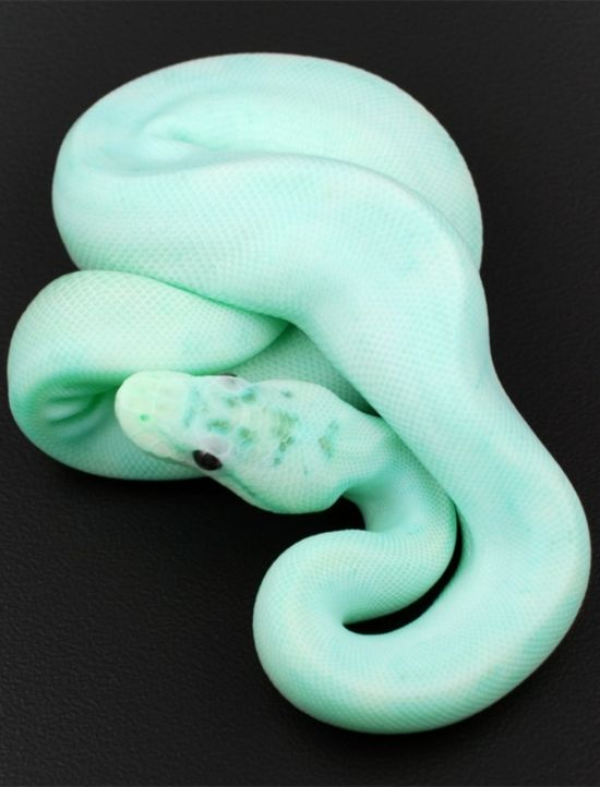 I'm scared of snakes but I would want to own this one <3