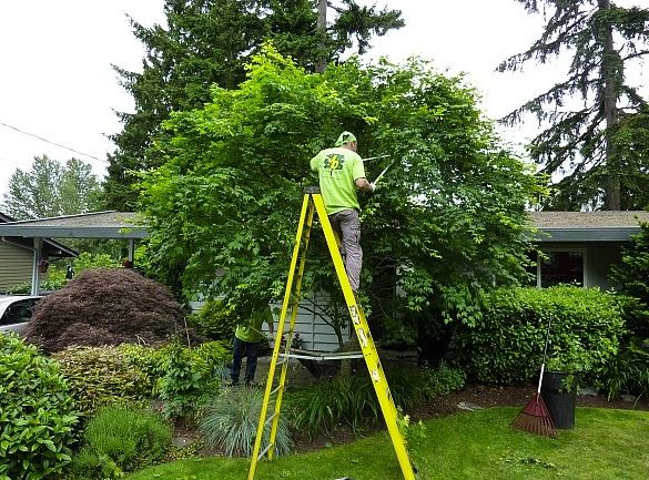 Tree Pruning South Jersey