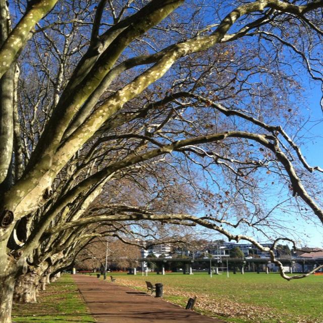 Winter in Auckland city