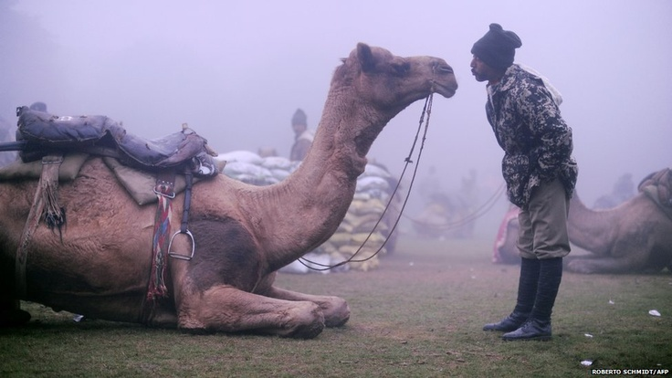 A member of India's Border Security Force camel contingent waits to take part in a rehearsal of the Republic Day parade in Delhi. India will celebrate its 63rd Republic Day on 26 January with a large military parade.