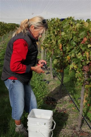 The first pick of Amisfield Pinot Noir from Block 1.