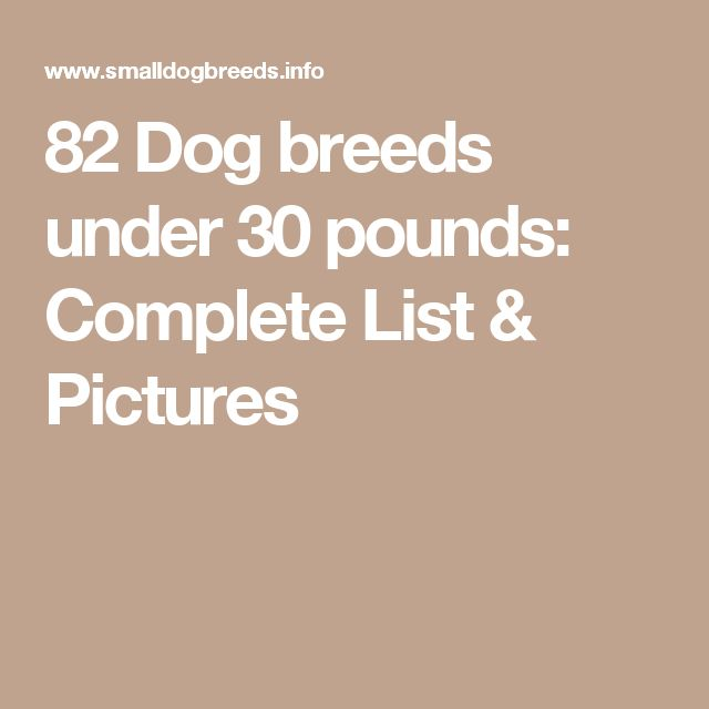 82 Dog breeds under 30 pounds: Complete List & Pictures