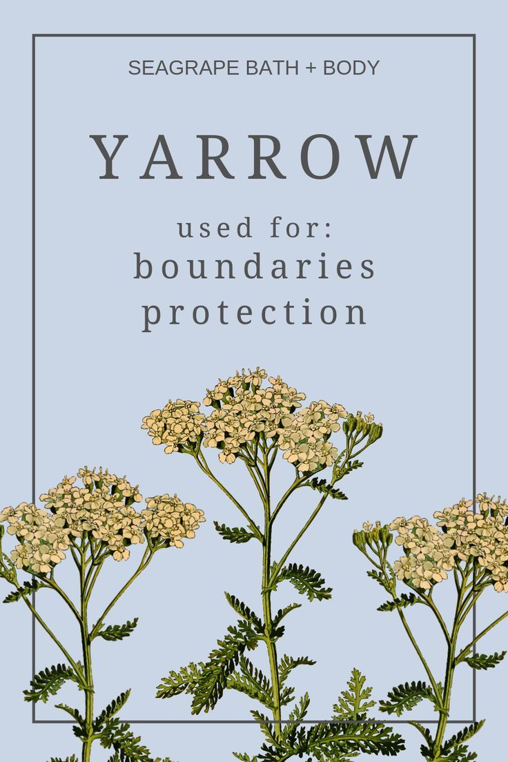 Yarrow A Plant That Grows Anywhere Has Many Wonderful Uses And Benefits Including For Protection And Boundary Setting I Yarrow Magical Herbs Herbal Tinctures