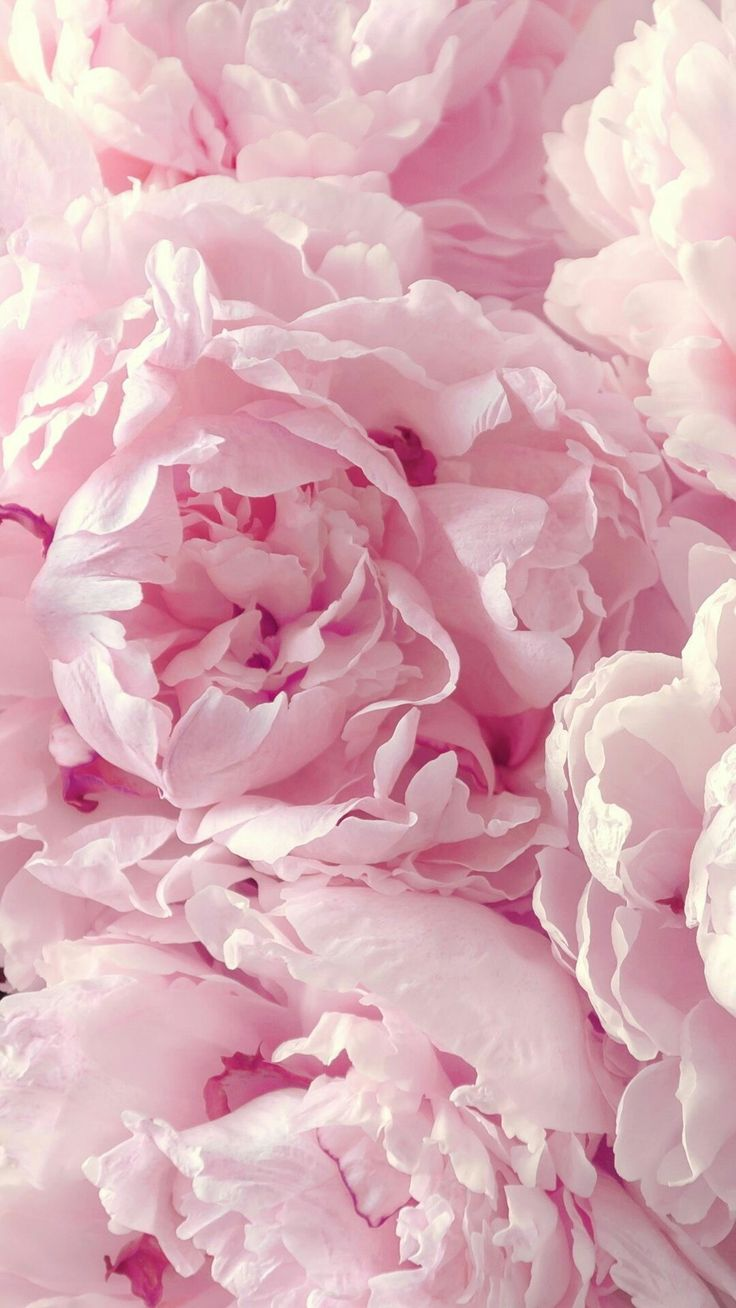 Pin by Lilac B on walls Pink wallpaper iphone, Peony