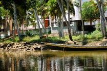 Poovar Backwaters http://lifestyleproblog.me/poovar-dream-holiday-living-water/