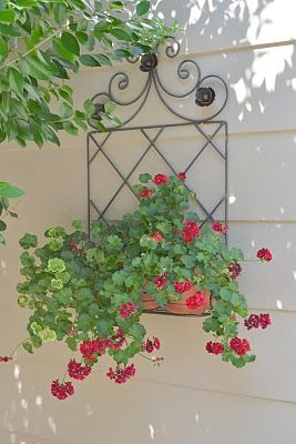 Love these trailing geraniums in a metal wall planter. PERFECT for front door makeover