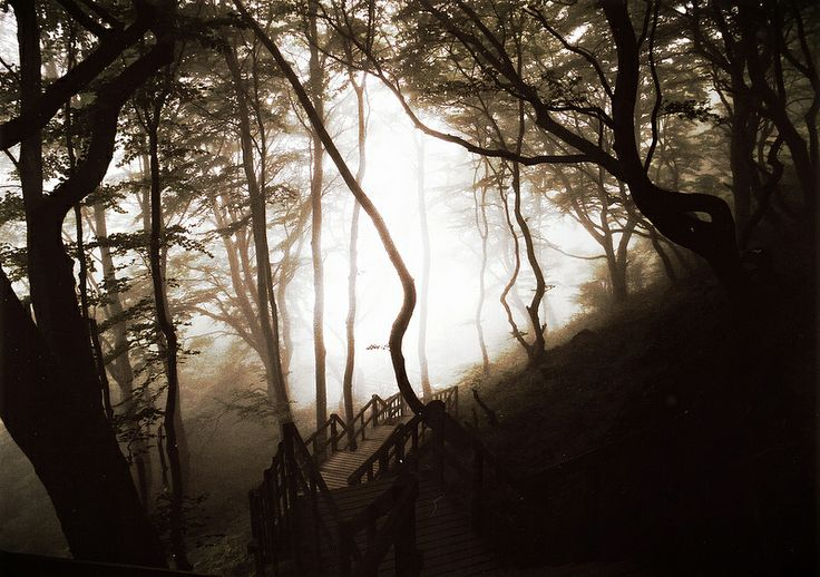 Møn Forest in the Morning Mist
