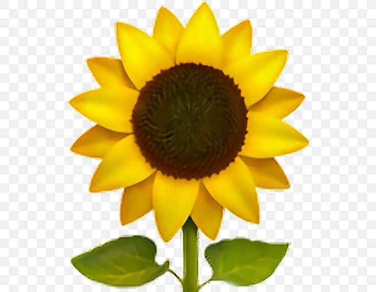 The Best Sunflower Iphone Emoji Png And Review In 2020 Sunflower Iphone Wallpaper Transparent Flowers Sunflower Wallpaper