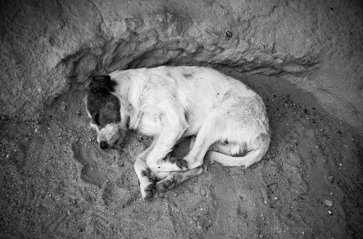 Dog by Rovsen Giffard on 500px