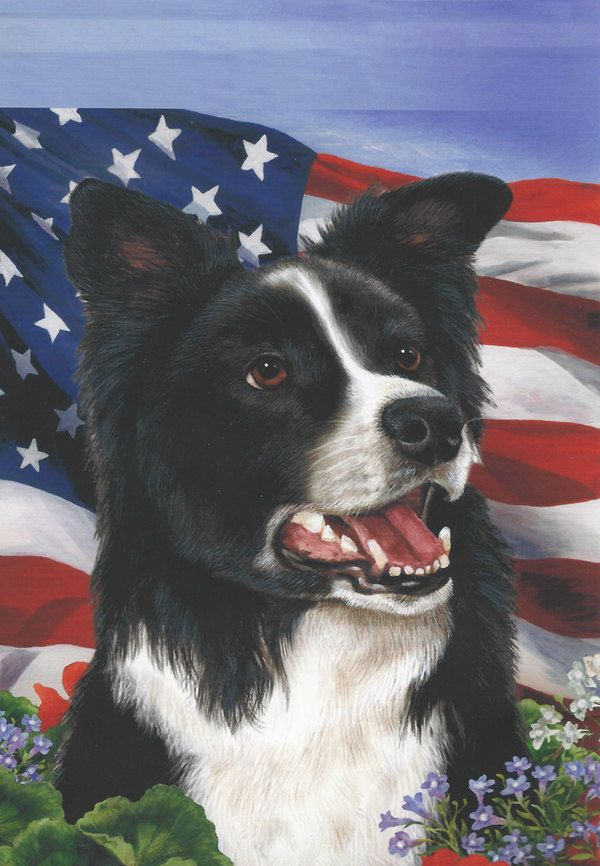 Border Collie Flag Usa Flowers Border Collie Collie Dogs