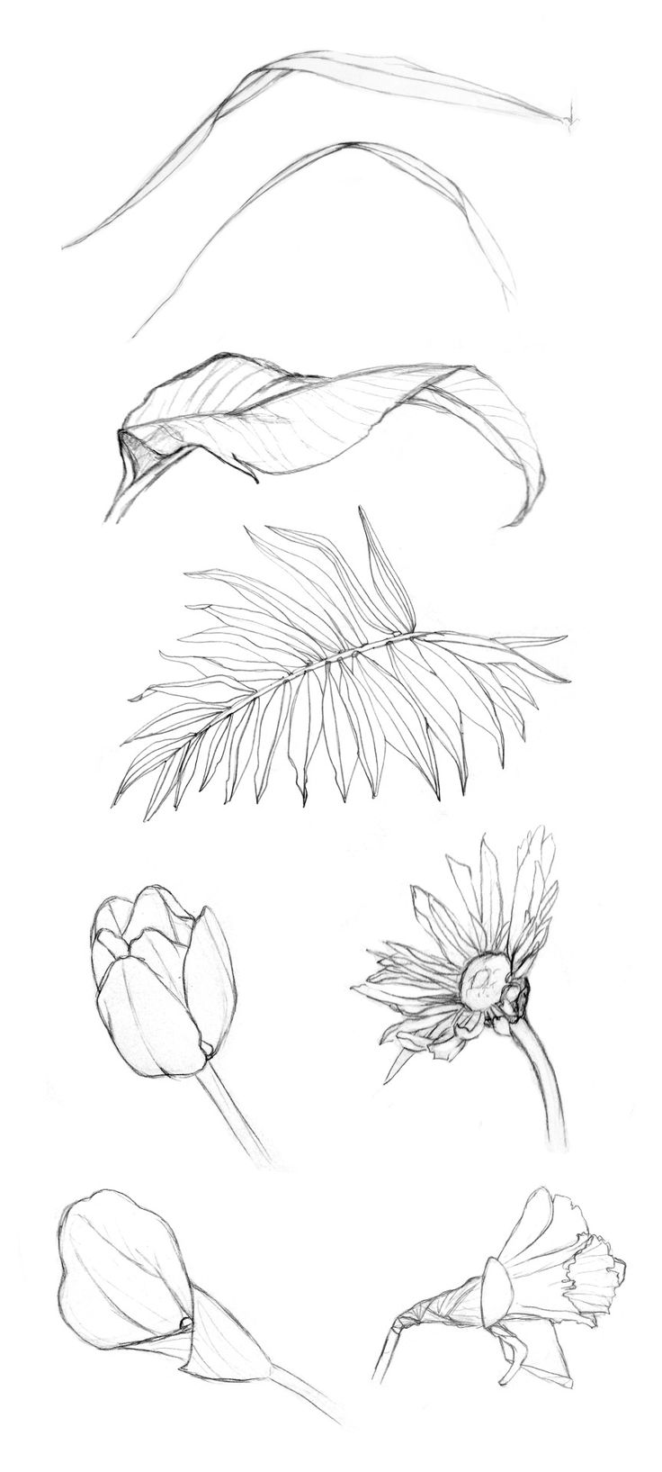 Simple Contour Line Drawings Of Flowers : How to draw realistic trees plants bushes and rocks a