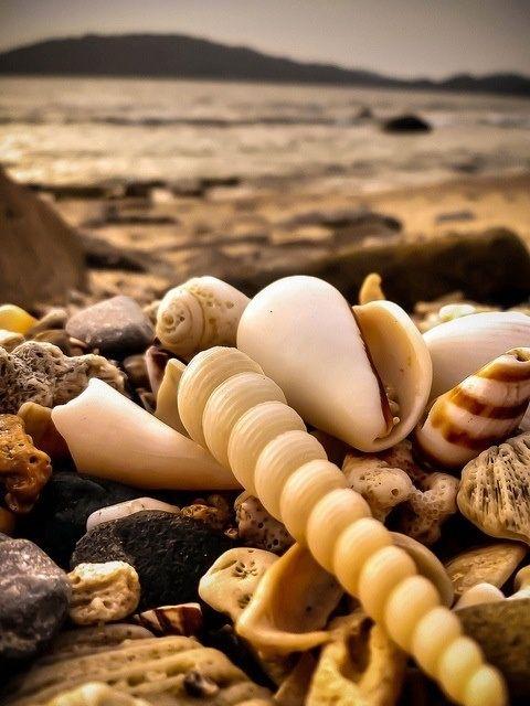 shells on the shore