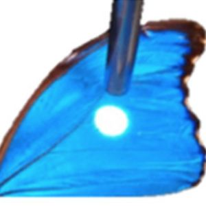 Butterfly Wings Inspire Chemical Weapons Sensors