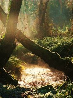 I feel like you could walk through different realms of time here : Forest stream