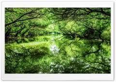 Znalezione obrazy dla zapytania nature hd